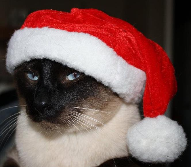 Santas-Hat.jpg
