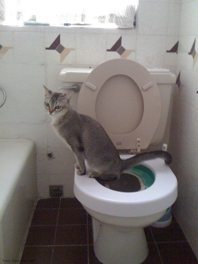 Cat Using a toilet