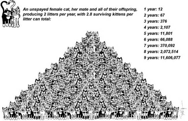 Overpopulation Pyramid for Cats