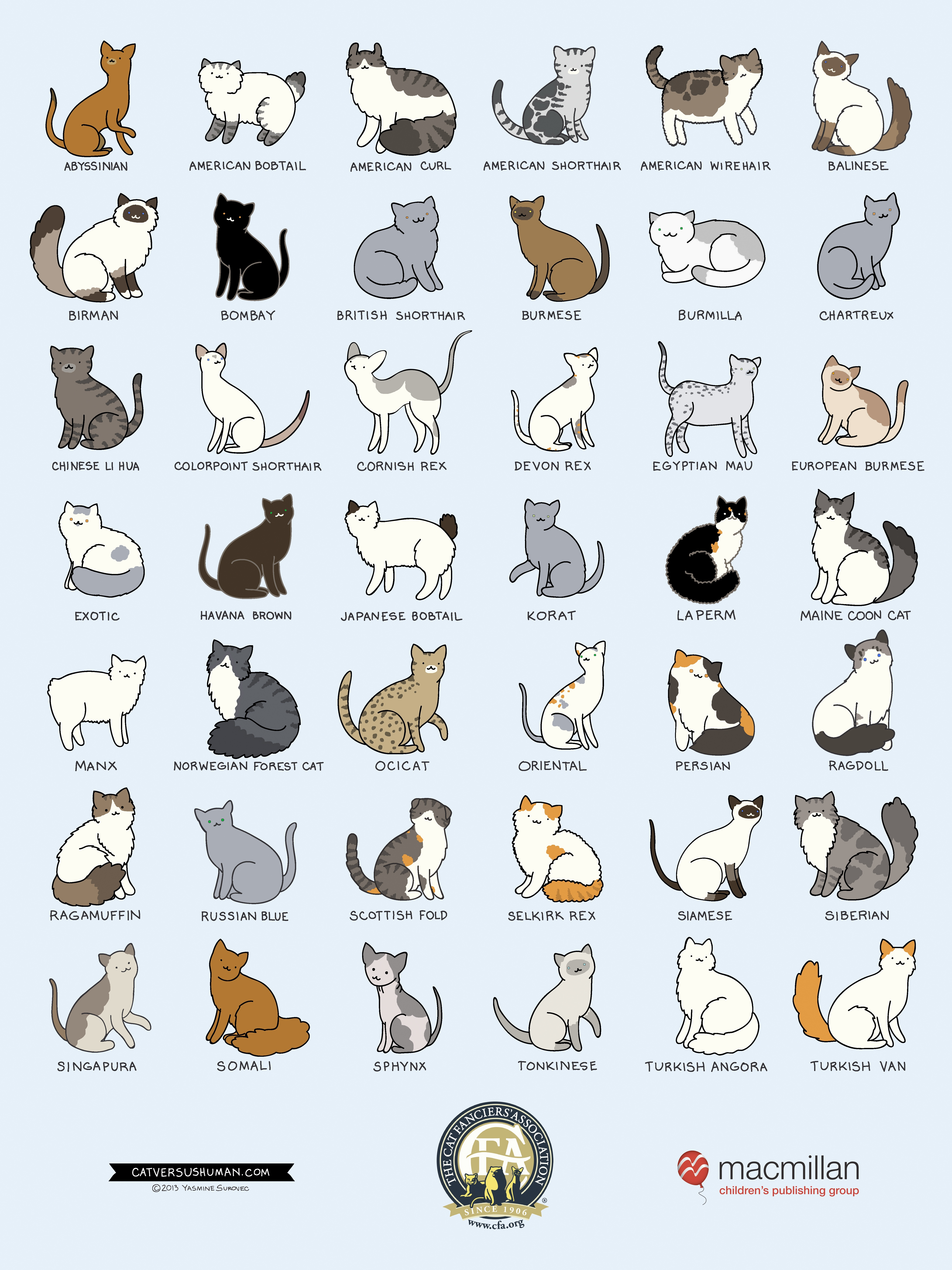 Cat Breeds Infographic