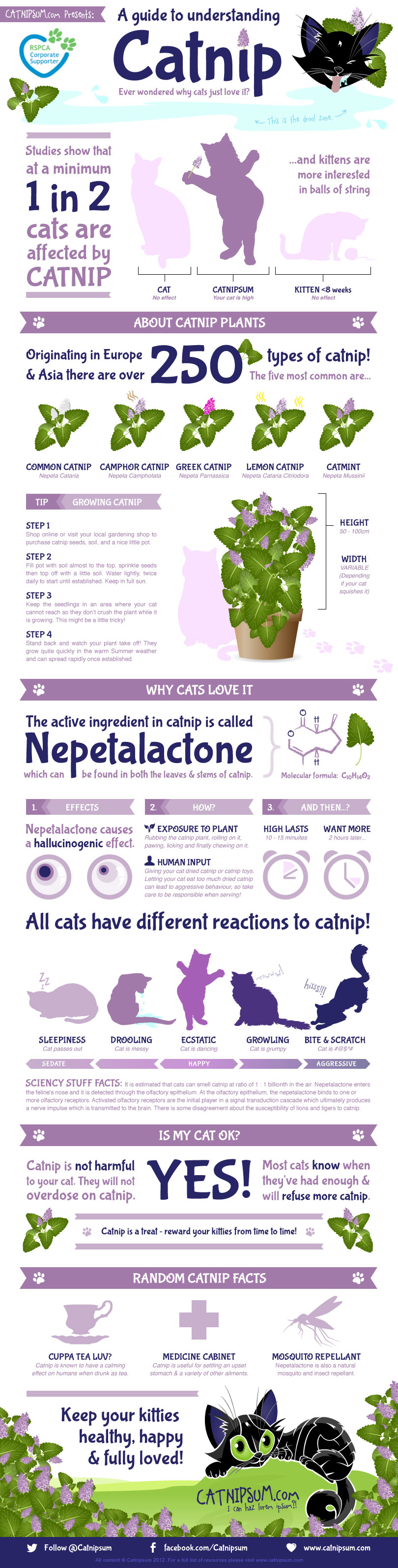 How Catnip Affects Cats Infographic