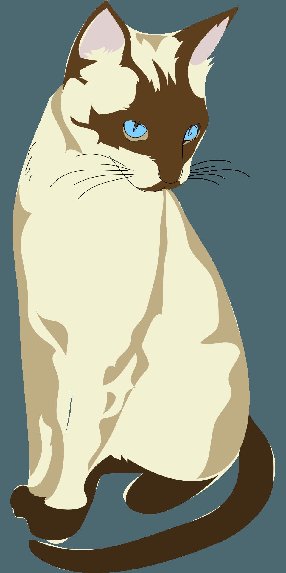 Chocolate Point Siamese Cat