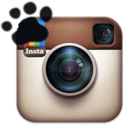 Instagram Paw