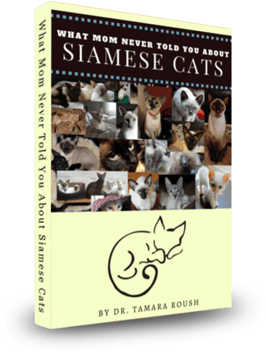 What Mom Never Told You About Siamese Cats